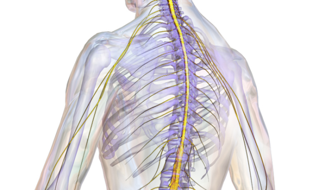 Suffering from a Brain, Back or Spinal Cord Injury?